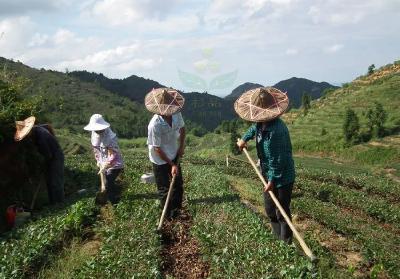 立夏过后,广大农人要特别注意这些田间管理工作!