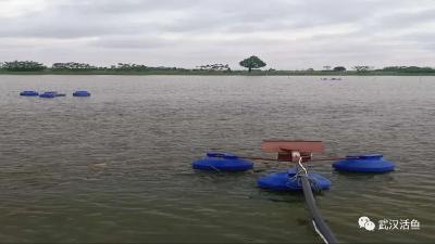 《武汉活鱼》农村水产电商有关单位(企业)推介之13:新洲区湖东村水产养殖场