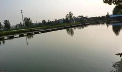 《武汉活鱼》农村水产电商有关单位(企业)推介之15:武汉众瑞泰联种养殖专业合作社