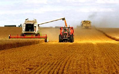 湖北确保今年粮食总产稳定在545亿斤