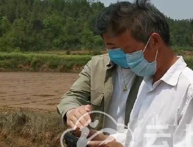 荆门:贫困户购买无人机  新科技运用到田头