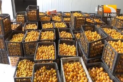 鲜果酿美酒 转化增值拉动水果规模种植