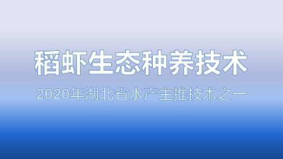 稻虾生态种养技术