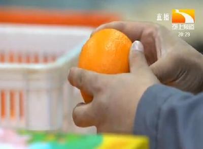 """上线47天 """"橙功""""款伦晚脐橙的""""甜蜜""""日记"""