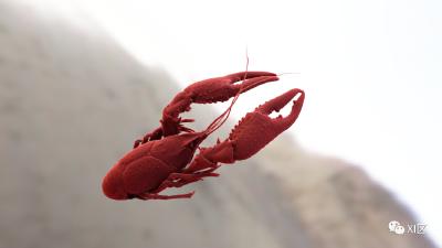 趣读 | 一只小龙虾究竟有多少肉?有位医生给它做了个CT……