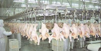 疫情下活禽禁售再升级?26省市推动家禽集中屠宰、冰鲜上市