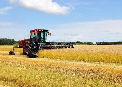 湖北夏粮丰收在望 确保今年粮食总产稳定在545亿斤