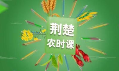 荆楚农时课第60讲:柑橘花期管理关键技术