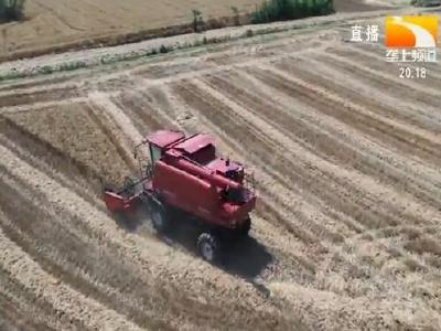 襄阳小麦收割过半 确保颗粒归仓