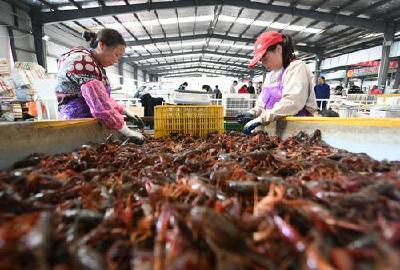 小龙虾买卖不愁了 荆州建设全国性小龙虾交易平台