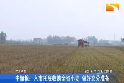 中储粮:入市托底收购全省小麦 做好充分准备