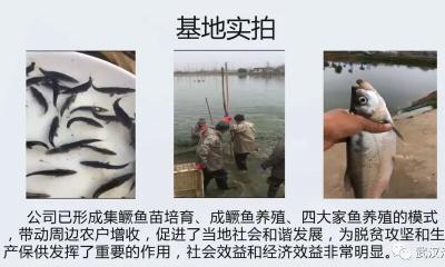 《武汉活鱼》农村水产电商有关单位(企业)推介之18:武汉市宏新渔业有限公司