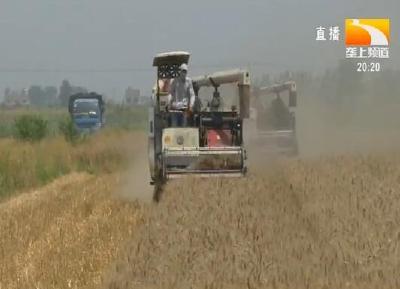 """枝江:20多万亩小麦成熟 农机抢收""""大作战"""""""