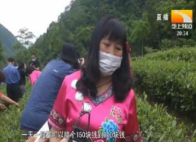 宜昌长阳:全产业链发展高山茶叶 巩固脱贫成果