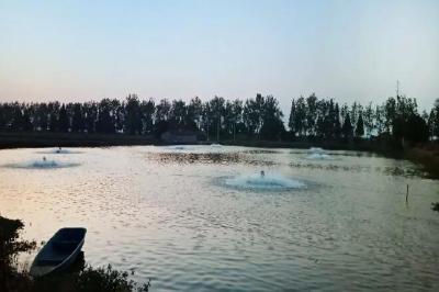 《武汉活鱼》农村水产电商有关单位(企业)推介之22:武汉康丰源特种水产养殖有限公司