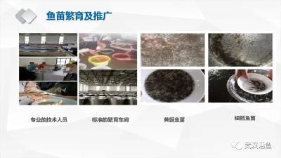 《武汉活鱼》农村水产电商有关单位(企业)推介之21:武汉渔水情生态渔业发展有限公司