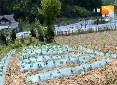 田园变公园 农旅融合助推乡村振兴