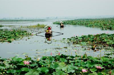 退垸还湖5.8万亩 汈汊湖百里旖旎美景重现