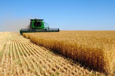 夏季粮油有望丰收 湖北将启动小麦托市收购