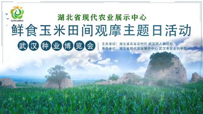鲜食玉米大会丨终于等到你!6月22日,我们相约在武汉