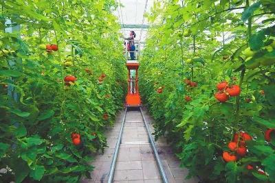 颠覆在即!2020年种植业10大新模式受热捧