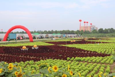 """武汉,一座""""有种""""的城市!220亩超大""""舞台""""等你来秀!"""