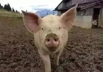 农业农村部:禁止畜禽粪直接还田,全国立即严查!