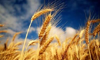 农业农村部回应粮食安全热点问题 警惕粮荒舆论