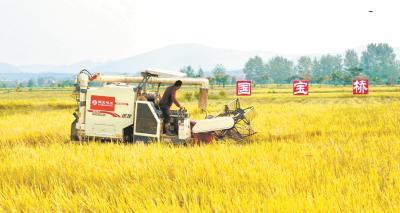 亩产量达550公斤 田间举办趣味赛 京山农户喜迎桥米丰收