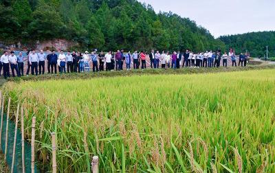 一水两用粮渔双赢 湖北稻渔综合种养经验走向全国