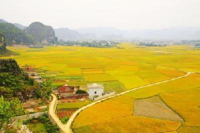 年产1.3万亿斤:我国粮食生产迈上新台阶