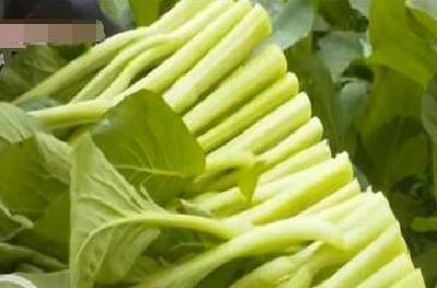 江陵小伙种植稀有特种蔬菜 带动乡亲奔小康