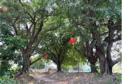 黄冈出台最严古树名木保护令 市县财政设专项管护经费