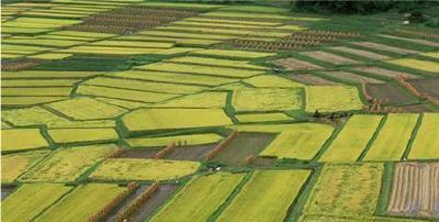 郧阳建成近3万亩高标准农田 确保旱涝保收