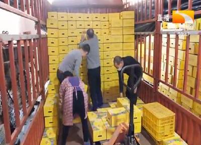秭归脐橙全国产销对接大会结硕果 首批8万斤脐橙发往江苏