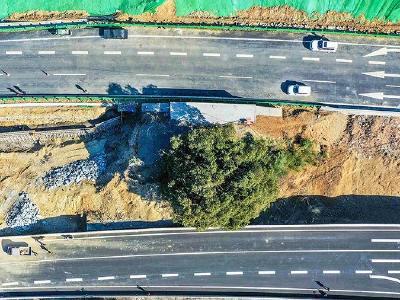 """湖北保康:多花1000万 高速建设为古树""""让路"""""""