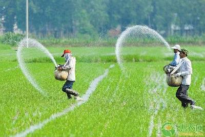 水稻如何科学选种?这六要点需牢记!