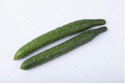 落蔓注重细节 黄瓜产量增品质佳