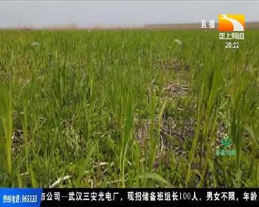 2021年湖北省水稻生产工作指导意见