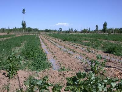 湖北去年治理退化耕地超500万亩 酸化土分布在这些地