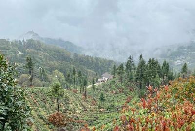 宜昌邓村乡:茶旅融合发展 点亮美丽乡村