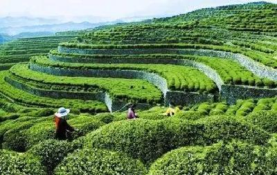 茶叶与旅游联姻 竹溪茶旅融合助力乡村振兴
