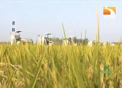 氮磷钾肥使用过量对水稻的影响