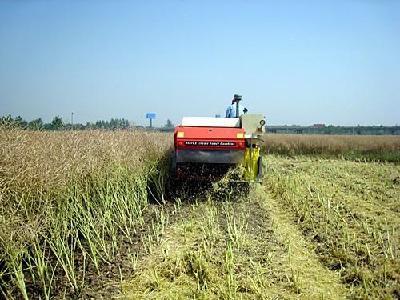 我省首次发布水稻油菜甘蓝全程机械化生产模式