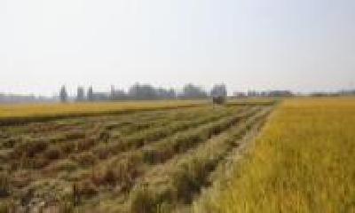 武汉拟建10个粮食增效模式示范点