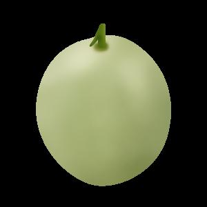 露天香瓜种植管理技术