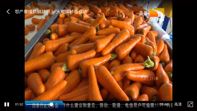 胡萝卜播种时间和方法