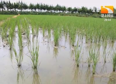 稻田种养新模式亩产青蛙772公斤