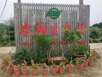 山东退役军人孝感建花园农庄:在第二故乡寻找儿时味道