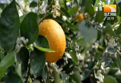 8月果树、茶叶农事指南
